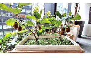 テラプロジェクト様植物